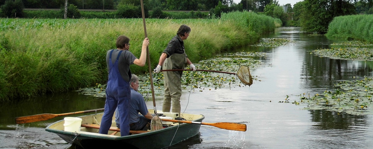 Heubach Untersuchung Fischbestand